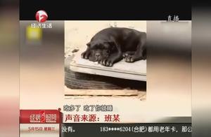 """给狗取名""""城管""""?男子录下侮辱视频发布,被拘十日!"""