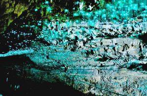世界最美的萤火虫景观,跟仙境一样美,被称为世界第九大奇迹