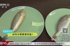 黄花鱼有假有真,那该如何区分真假黄花鱼?一起看看专家有何妙招