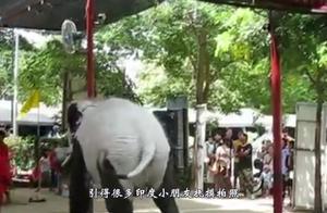 """印度多次租借熊猫遭拒,于是一气之下,自己开始""""造""""熊猫"""