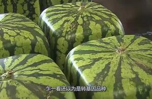 日本卖15000的天价西瓜,土豪砸钱买了一个,才刚切开就呆住了