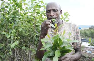 这个国家的人不种粮食,靠吃天然树叶存活,政府也无能为力