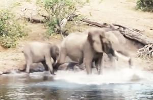 即使被鳄鱼咬住鼻子,大象依旧威力不减,大象:就凭你还想吃我?