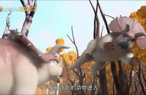 猪猪侠之恐龙日记:猪猪侠找到了三角龙,这个家伙真是太暴躁了