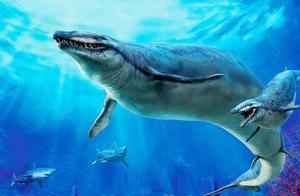 远古鲸鱼有多可怕?科学家发现其不为人知的一面,极为凶猛
