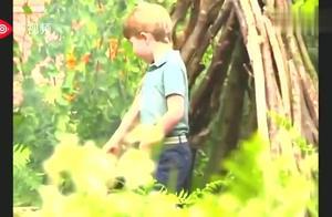 英国皇室公开威廉王子全家福:一家五口逛花园,小王子太可爱了