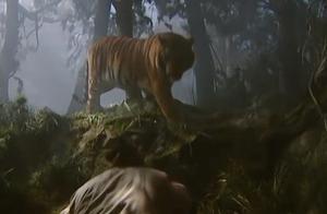 水浒传:你这畜生!李逵的老母亲被老虎吃了,李逵一怒之下杀了它