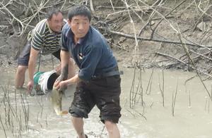 荒废十年的河坑,农村大哥3小时抽干,二斤鲤鱼一条又一条,赚翻了
