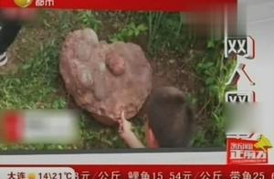 江西:4名学生运气爆棚,在散步时发现恐龙蛋化石