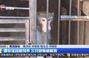 遭非法囚禁饲养,三只猕猴被解救!