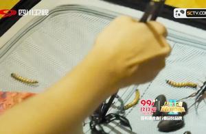 杨千嬅打开节目组大黑箱,直接被吓到崩溃,箱子里的活物太恶心了