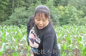 农村小英子:幺妈薅苞谷,说今年的种子不好,听听咋回事啊