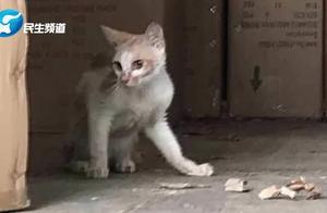 弱小可怜又无助——中国小橘猫被误关集装箱运到米兰