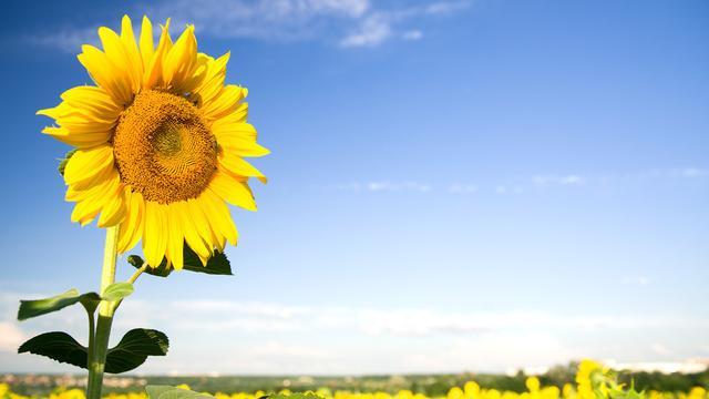 以我在阳光下成长为题写一篇作文