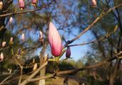 等闲识得东风面,万紫千红总是春.这句话蕴含什么哲理