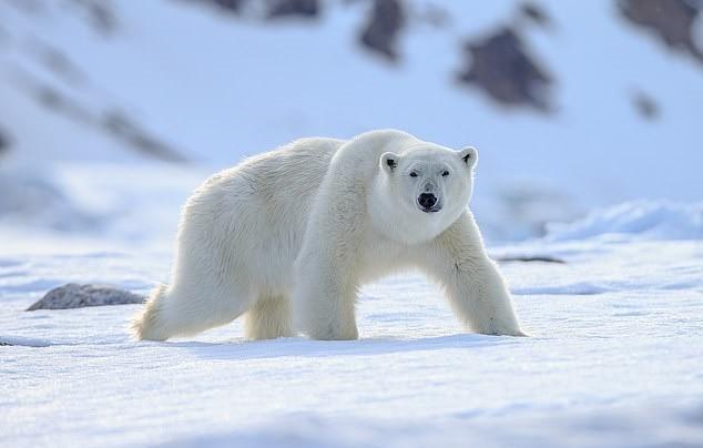 男子北极露营 半夜被北极熊撕咬而死