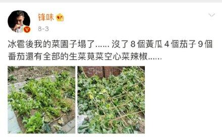 谢霆锋生日,王俊凯祝锋哥菜园子无坚不摧,锋哥会如何回应?