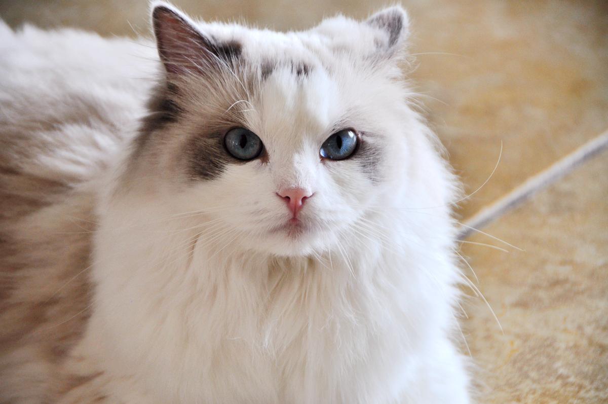 守护主子的玻璃胃?三只小宠物国产猫粮测评