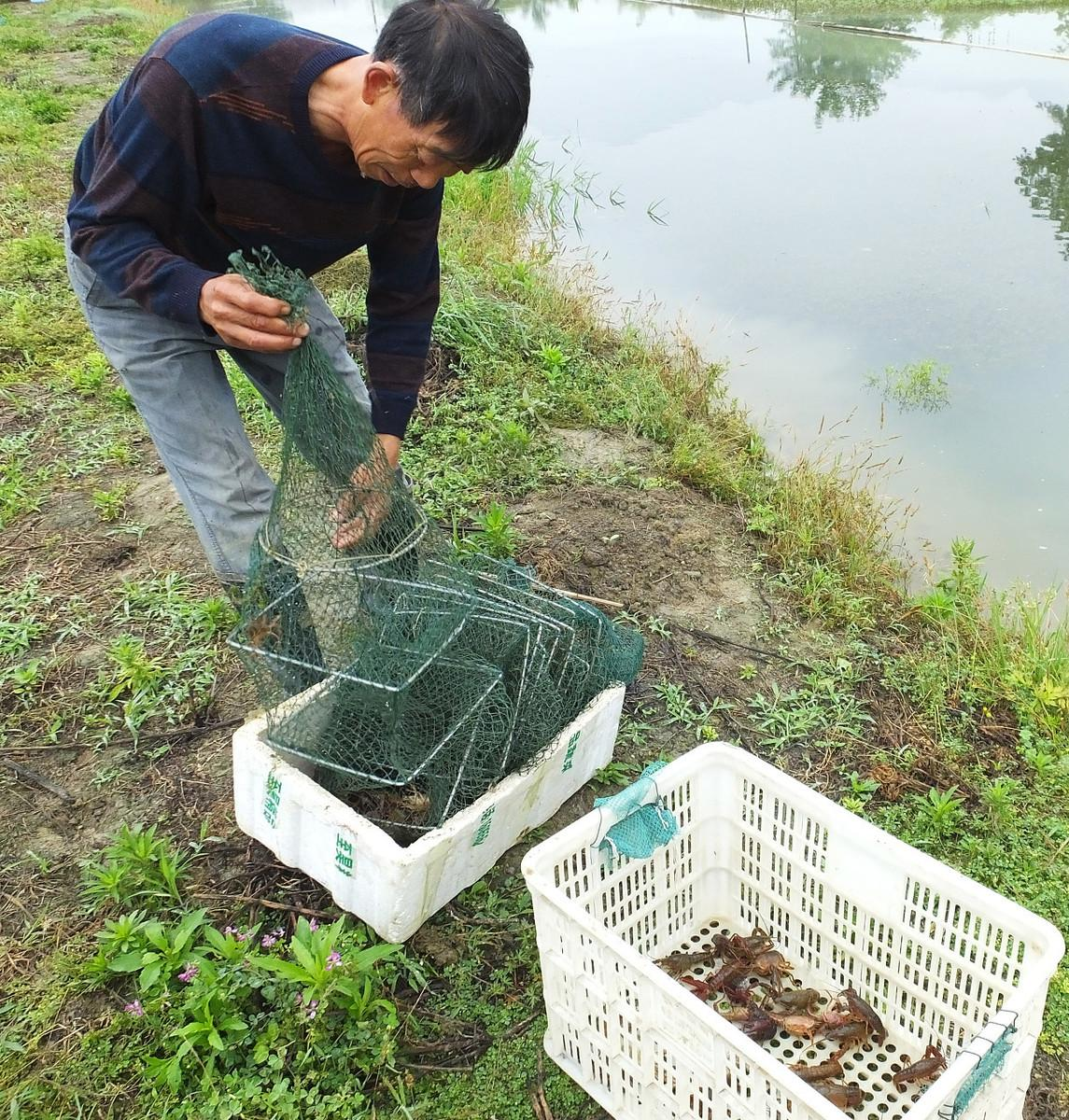 投放少量的鳝鱼和黑鱼,也许会增加小龙虾进地笼的概率?
