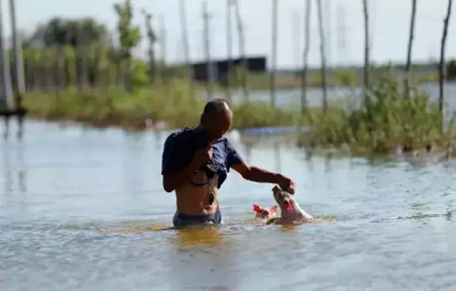 當寵物不幸掉進水里,如何「幫助」它們呢?「網友:方法不錯,不過救起來之後還是活的嗎?」-Dog Time