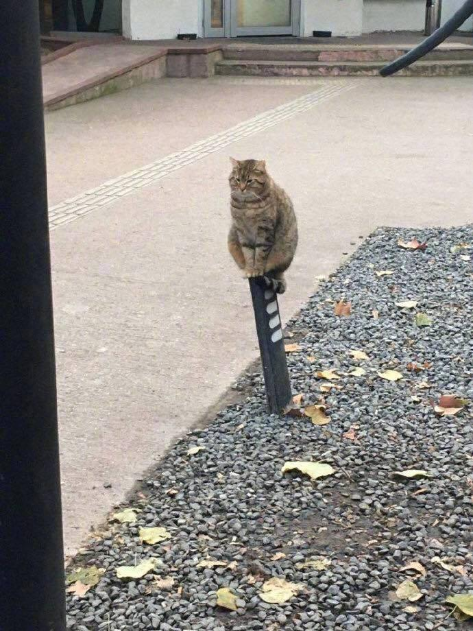 猫咪立于墩子上 网友发挥了他们的想象力