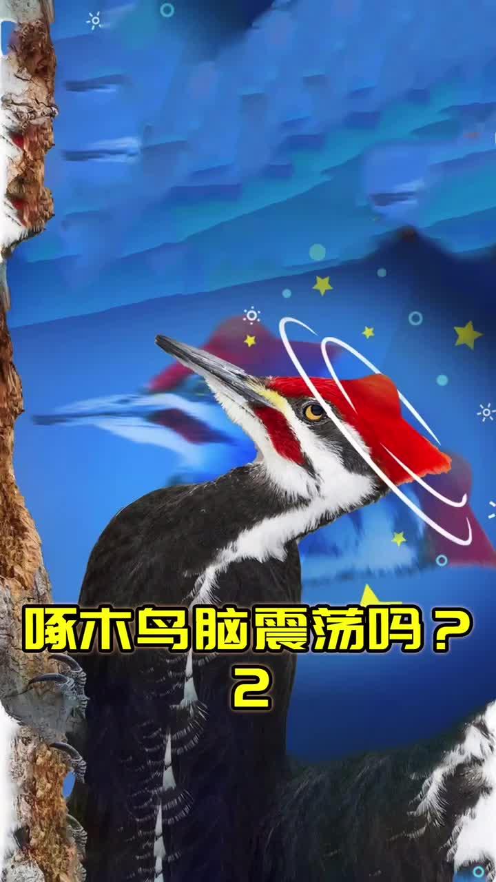 冷知识:为什么啄木鸟不会脑震荡?2/2