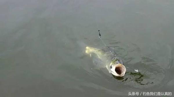 本人刚学钓鱼,新手一个,有两次钓到大鱼都脱钩了,这是为什么