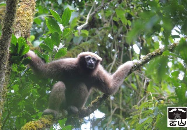类人猿的种类