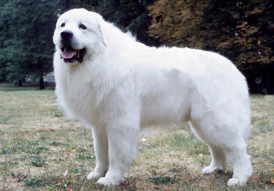 狗狗的那个品种叫什么熊
