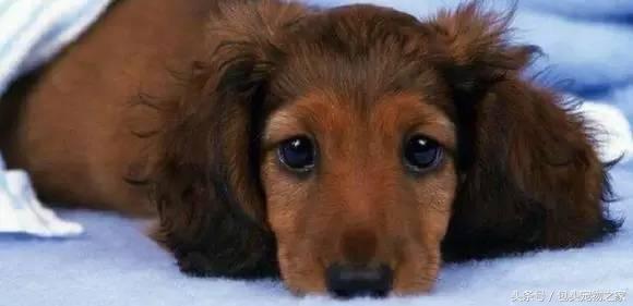 怎么知道狗狗有没有感冒