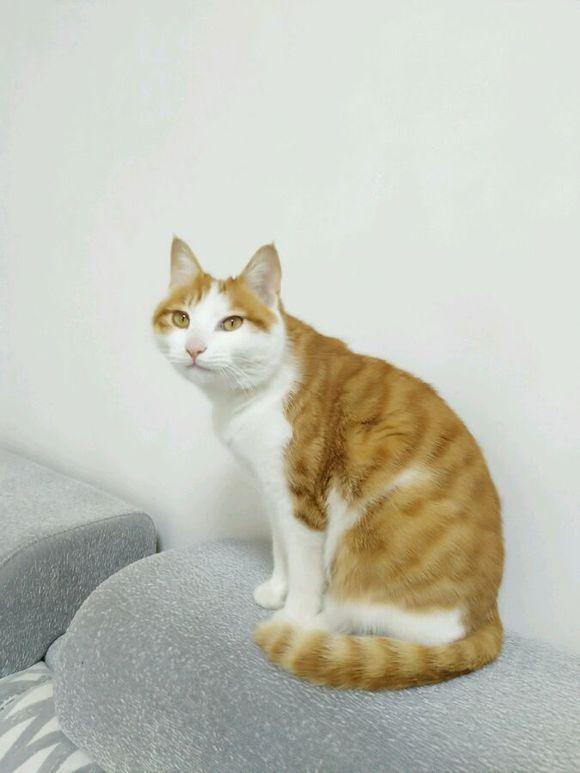 男子发现自家猫咪正在偷吃辣条,网友纷纷表示,这肯定是只四川猫