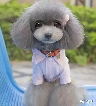 第一次养狗怎么给狗狗洗澡