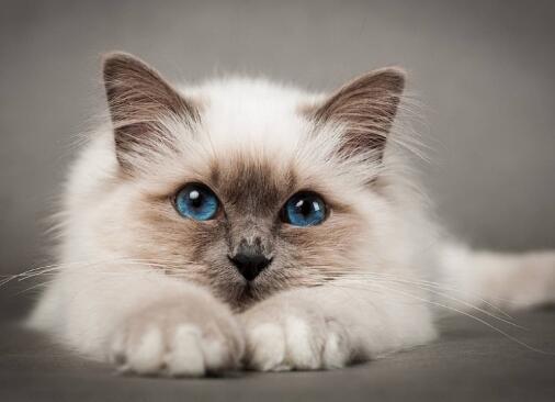 猫叫的时候是什么意思
