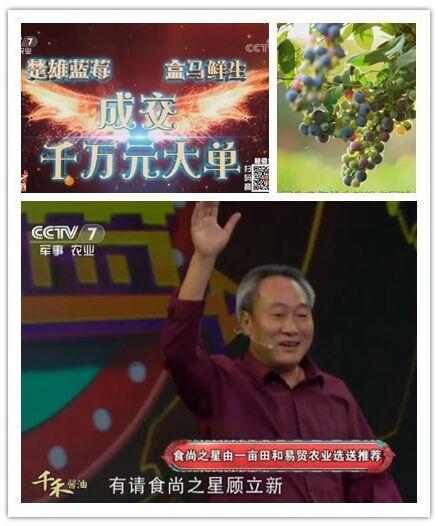 中国最大的蓝莓基地是哪里
