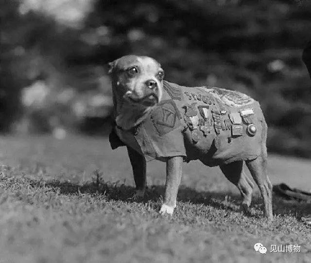 那些有功勋的军犬