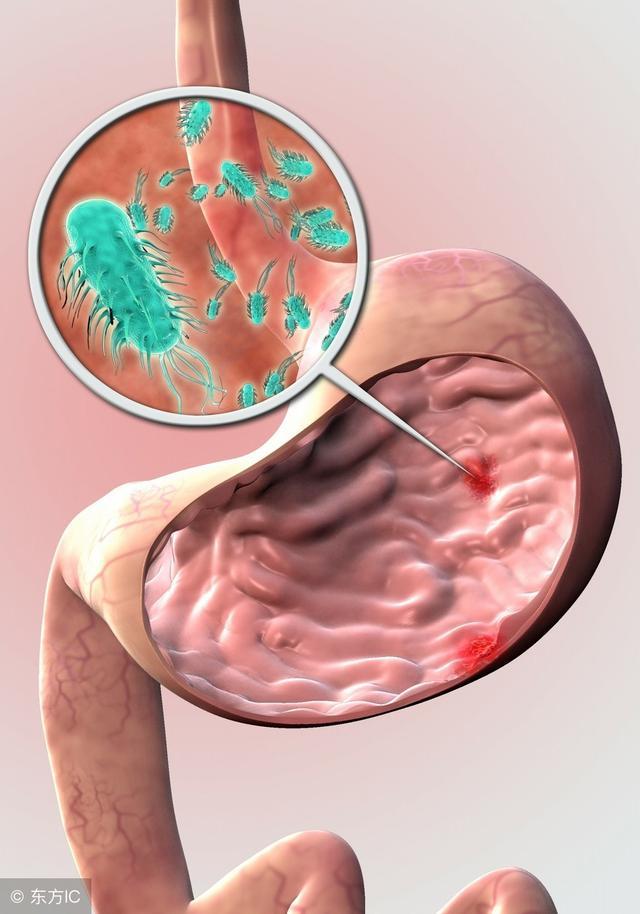 胃蛋白酶的作用