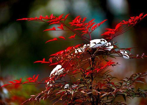 什么果树开花满枝