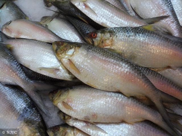 勒鱼怎么做好吃?