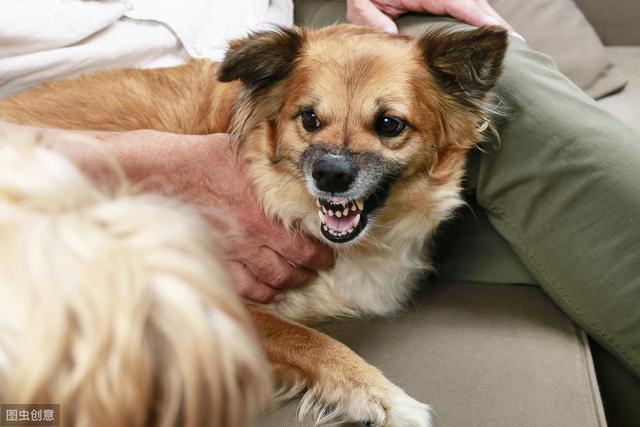 喜欢乱叫的狗狗会是什么原因