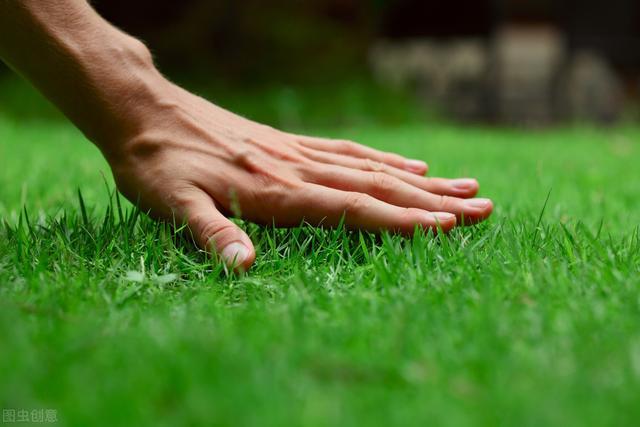 北方草坪有哪几种常见病,怎么防治