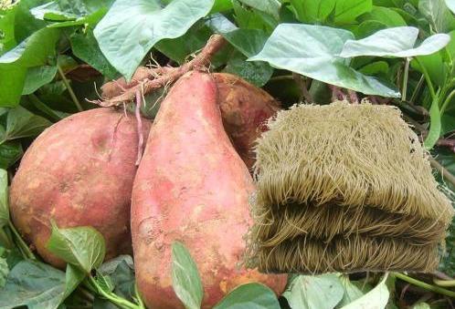 红薯怎么加工成粉,红薯淀粉制作方法
