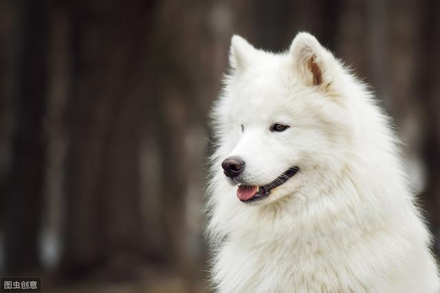 对人态度最好的几种狗