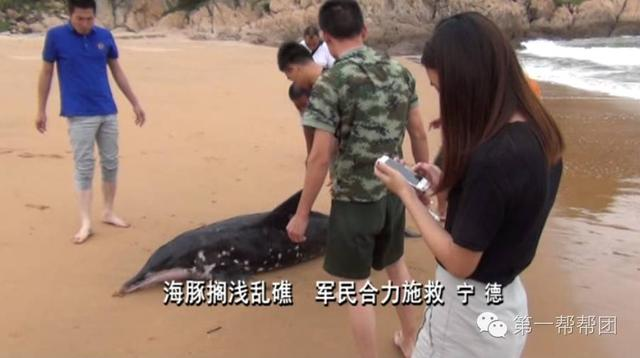 宁德:海豚搁浅乱礁 军民合力施救