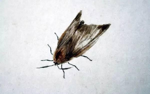 齐白石国画中的飞虫辑录,让你仔细看个够