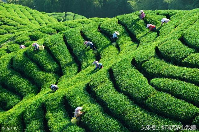 中国十大名茶有哪些,中国十大名茶排名及