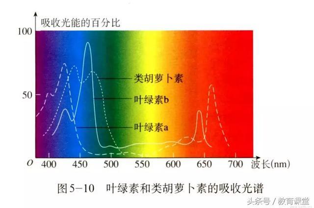为什么光合作用选择了绿色多数