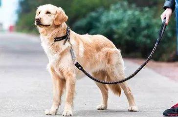 狗狗丢失怎么办?我这有4个办法,希望能帮你快速找回爱犬
