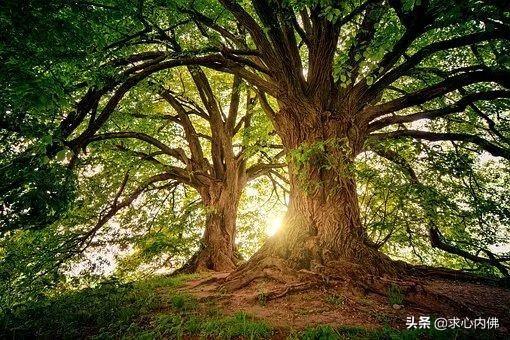 """树上的男爵:一位在树上生活53年从未下地男人的""""真实生命体验"""""""