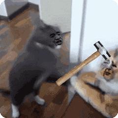 你的手机里有哪些猫咪搞笑图片