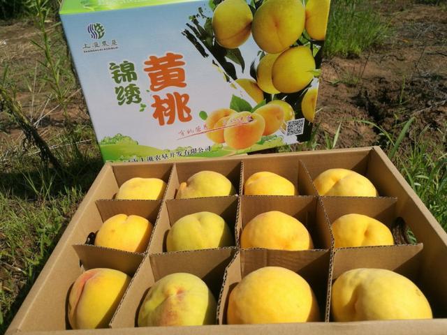 一口锦绣黄桃,吃出了上淮的春天